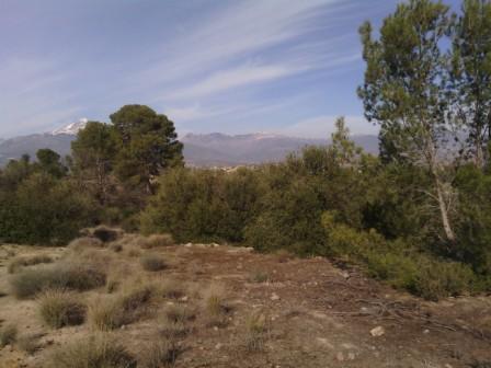 Ciel bleu et végétation kabyle